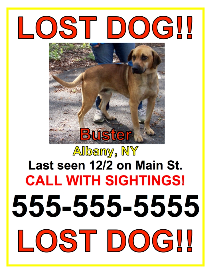 lost dog - sample